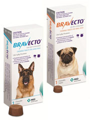 Bravecto+Chewable+for+Dogs